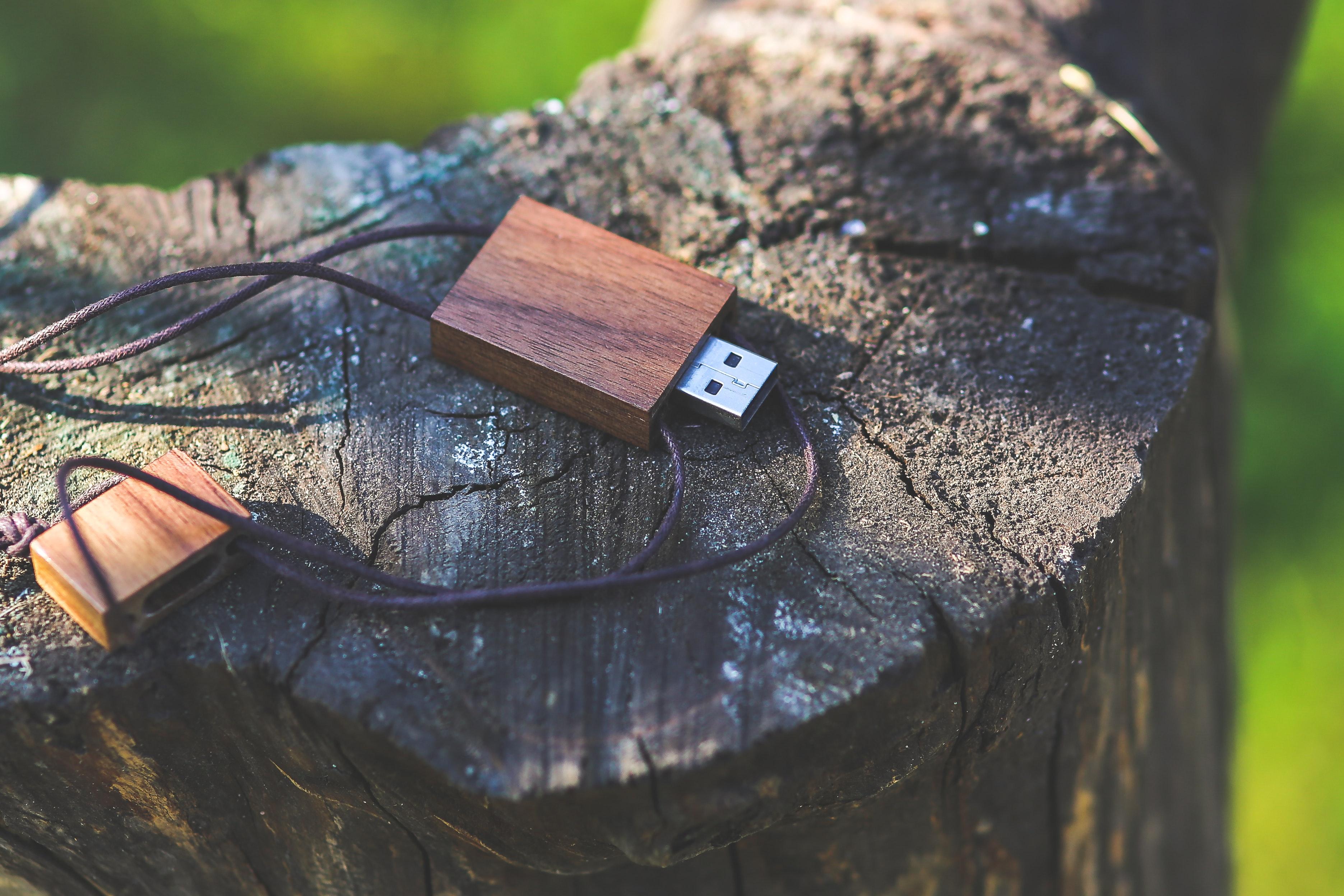 clé usb sur souche d'arbre